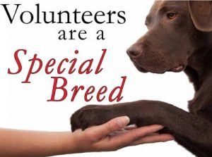 specialbreed